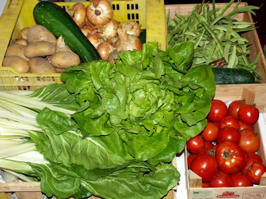 verduras alcoubo de zacande